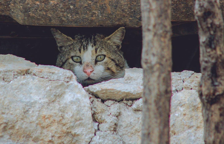 Cat Peeking Behind Rocks