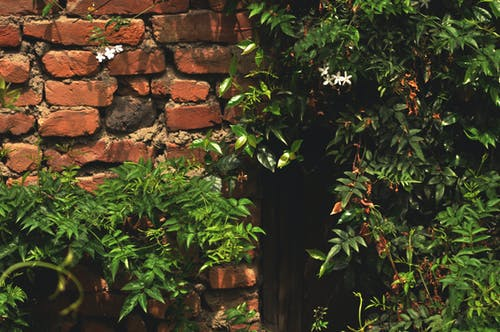 Gratis arkivbilde med bakgrunnsbilde, blomstre, grønn, hvite blomster