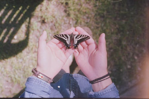 Free stock photo of butterfly, film, summer, vintage