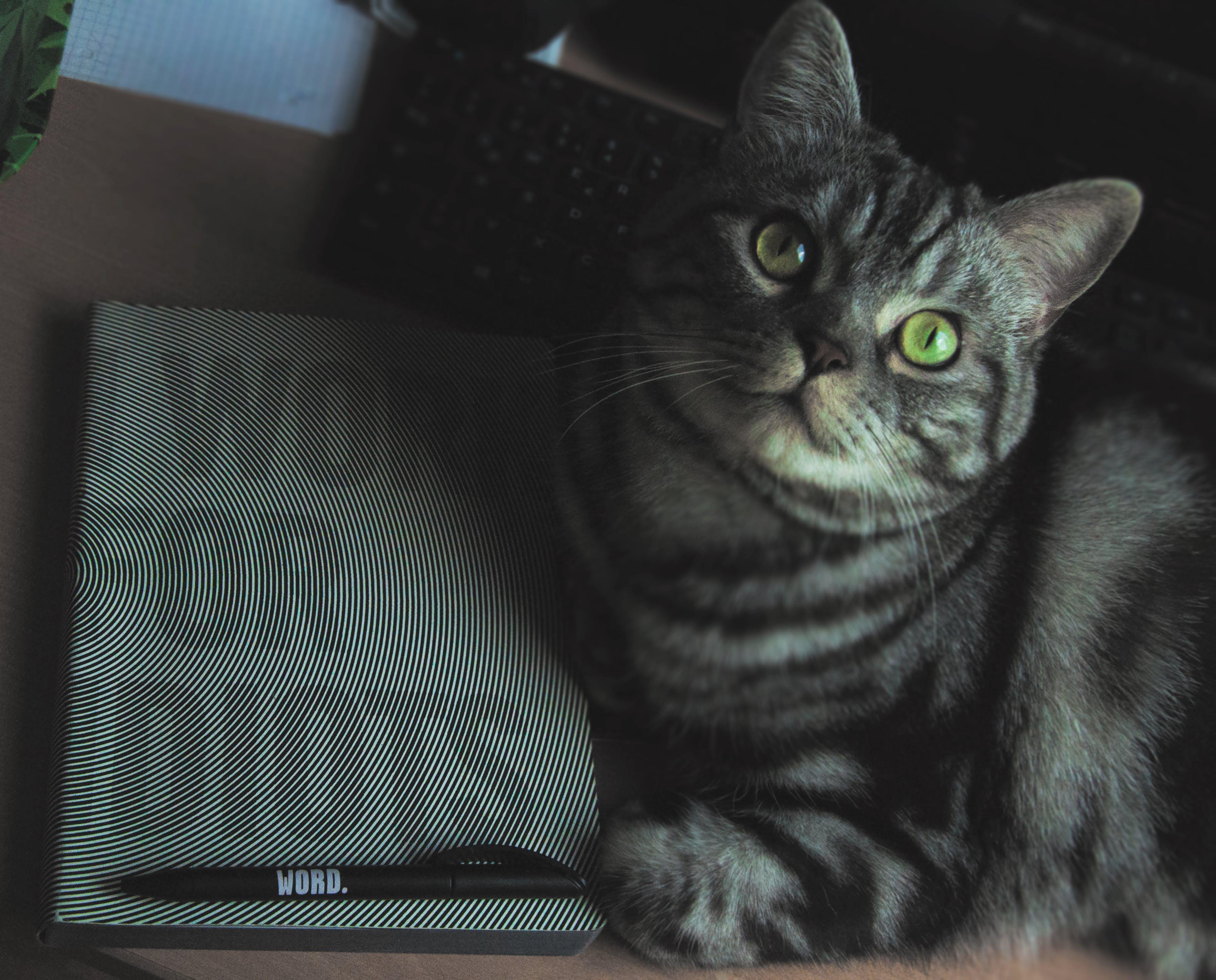 かわいらしい, ひげ, ぶち, キティの無料の写真素材