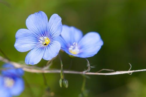 Ảnh lưu trữ miễn phí về độ sâu trường ảnh, hoa, màu xanh da trời, Thiên nhiên