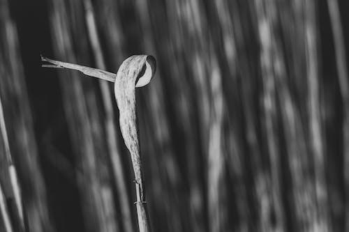 Imagine de stoc gratuită din alb-negru, fundal, iarbă
