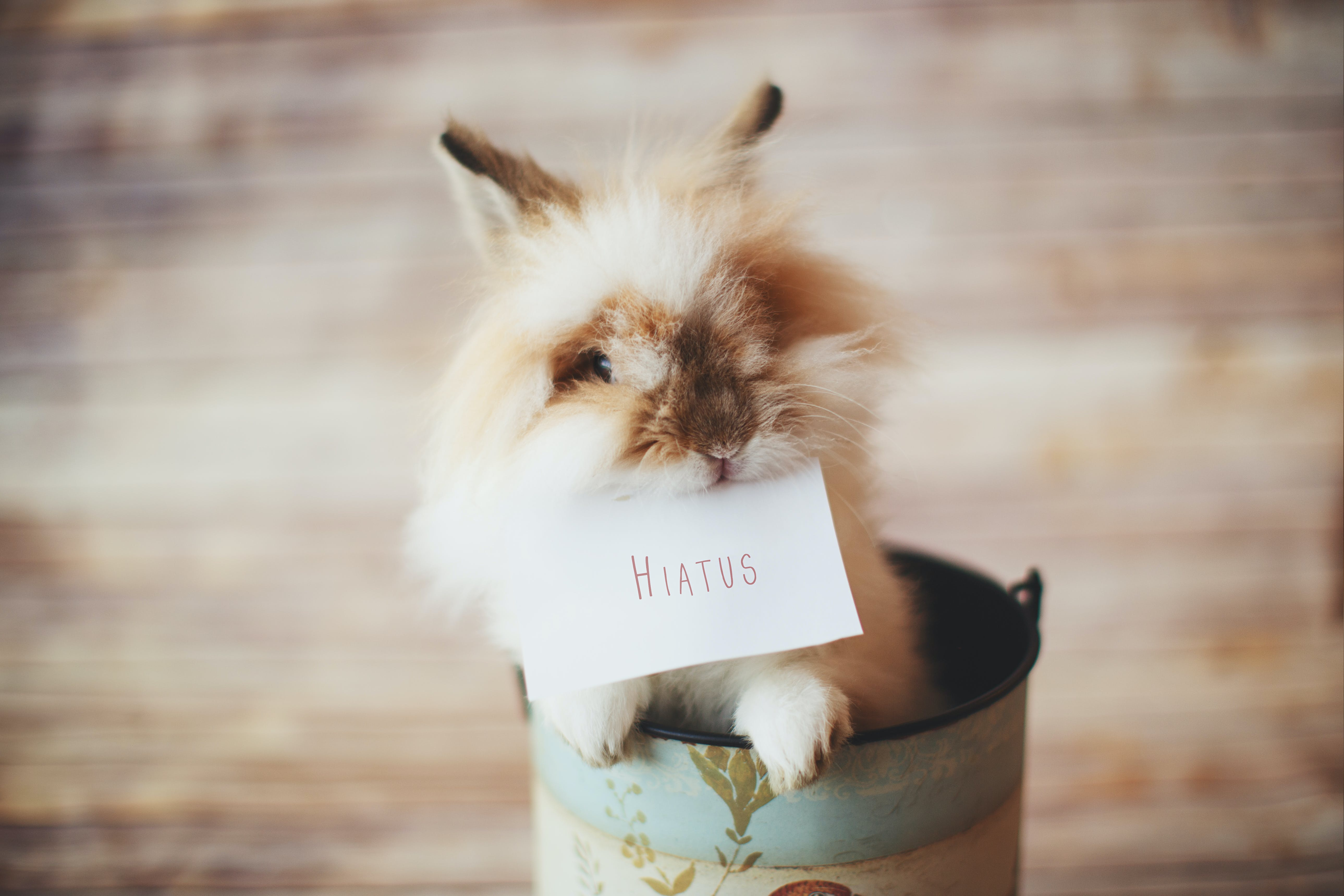 Selective Focus Photo of Guinea Pig Holding Card