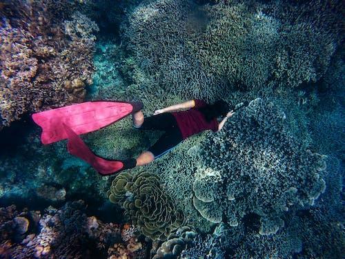 freedive, 人, 冒險, 水 的 免費圖庫相片