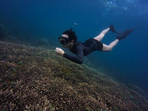 모험, 물, 물고기, 산호의 무료 스톡 사진