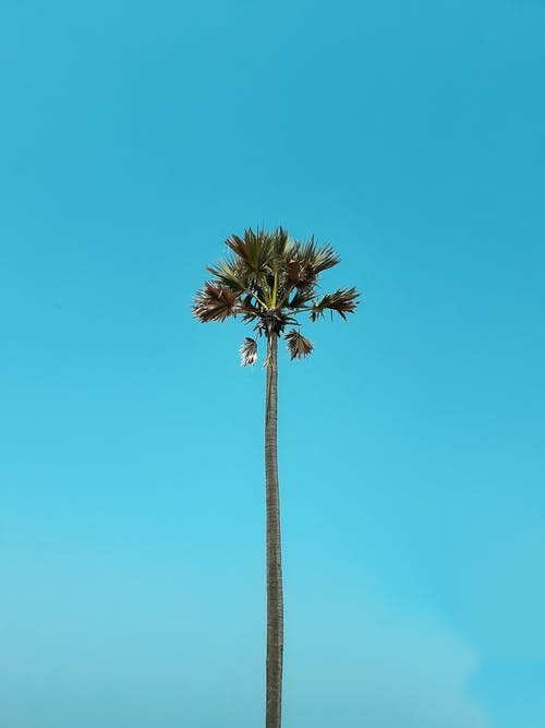 Photo of Palm Tree Under Clear Blue Sky