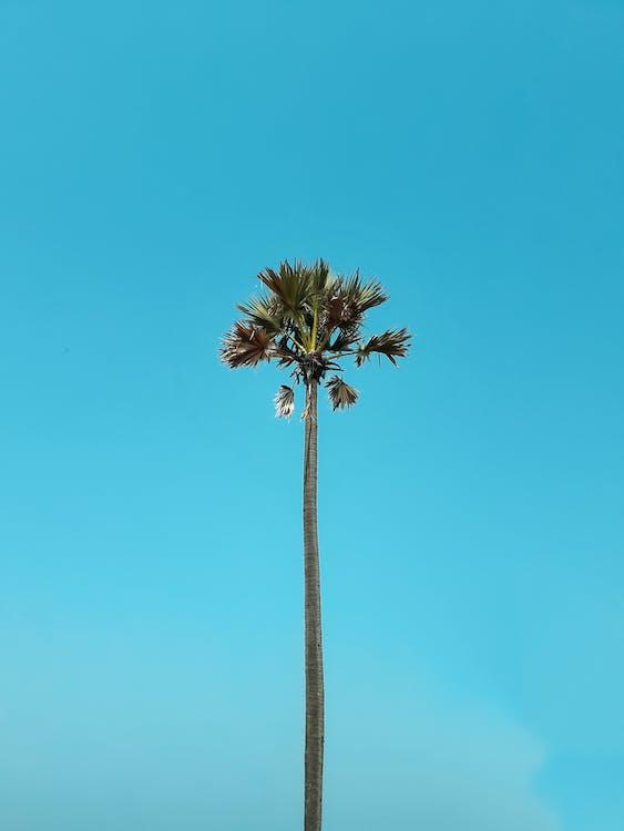 cel blau, estiu, idíl·lic