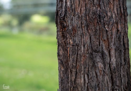 Free stock photo of brown, green, tree, tree trunk