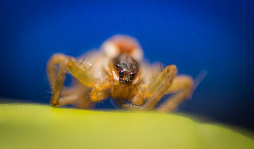Free stock photo of bug, bugs, insect, jumping spider