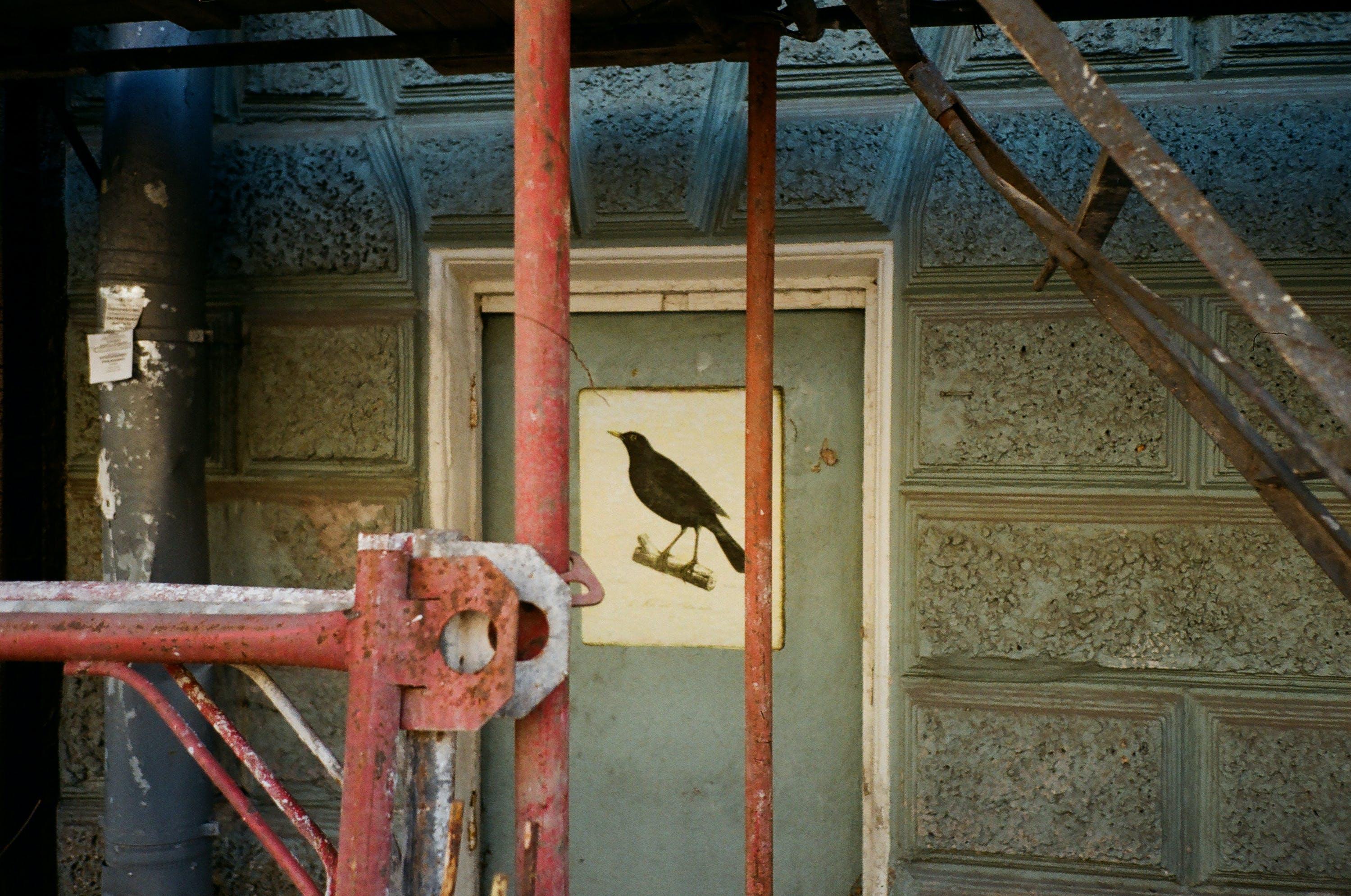 Brown Bird Painting on Door