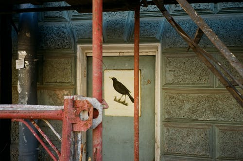 Brown Bird Painting on Door
