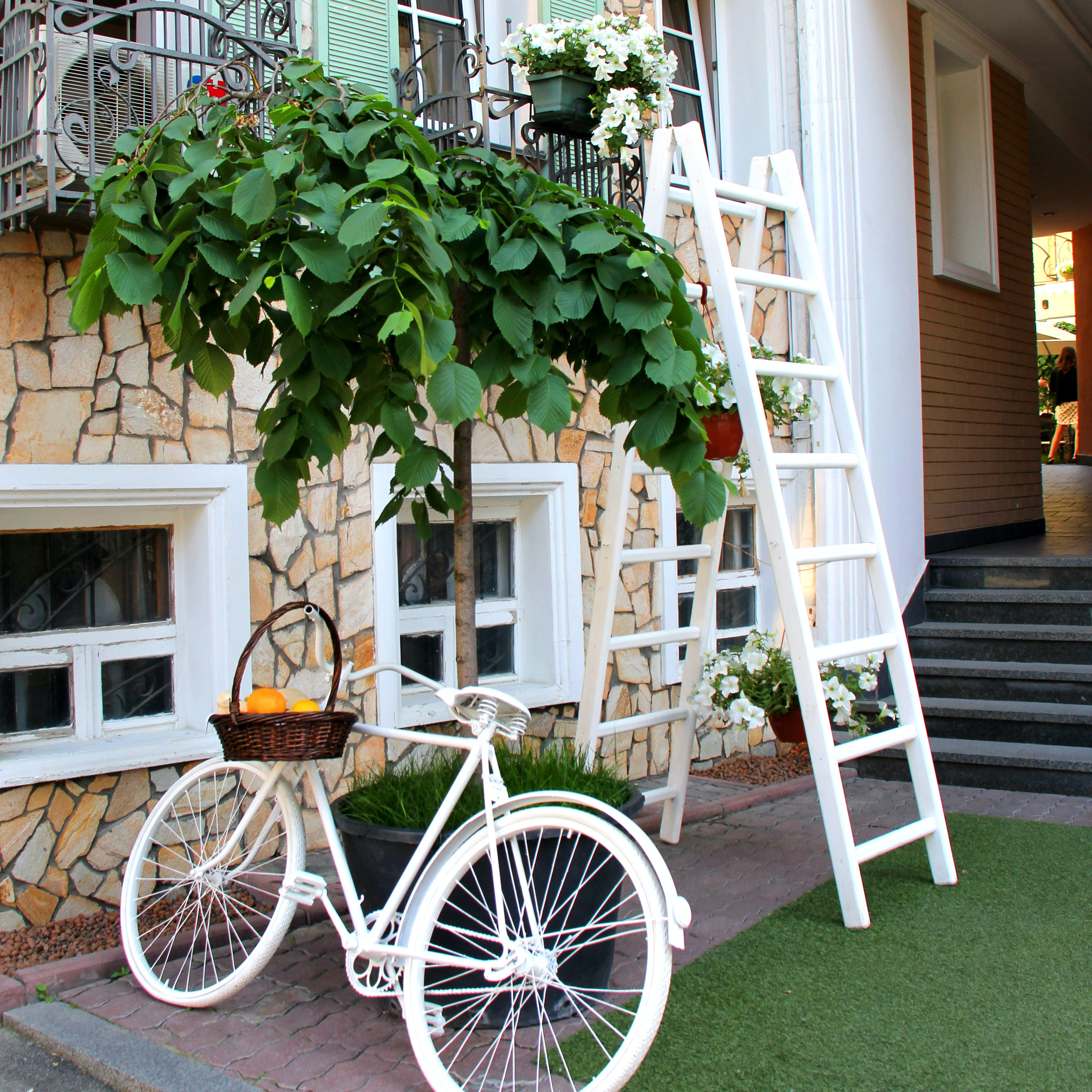 White Step Through Bicycle Leaning Beside Tree Plant