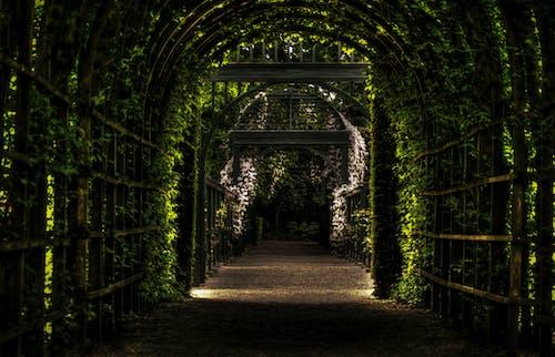 prinsenhoftuin, prinsentuin, 公園, 宮殿 的 免費圖庫相片