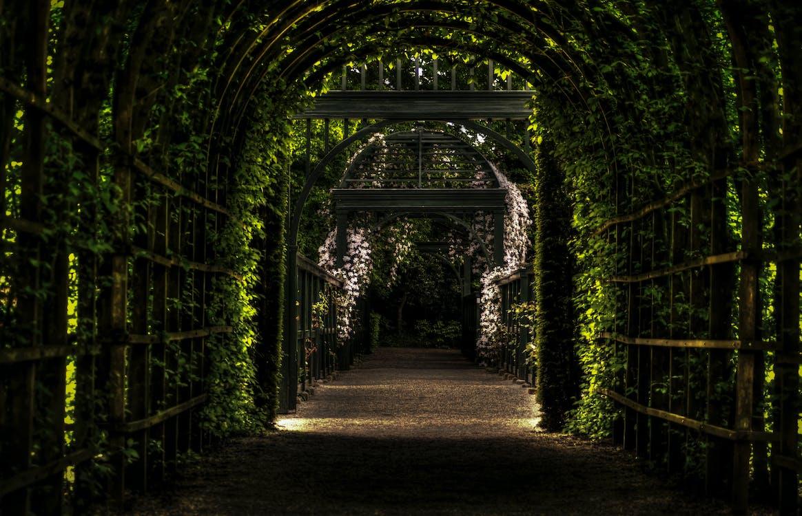 Camí, Groningen, jardí