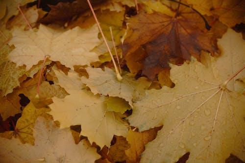 Безкоштовне стокове фото на тему «абстрактним фоном, безкоштовні шпалери, великий лист, дерево»