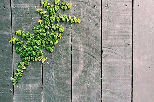 Gratis stockfoto met abstract, abstracte vormen, bladeren, decoratie