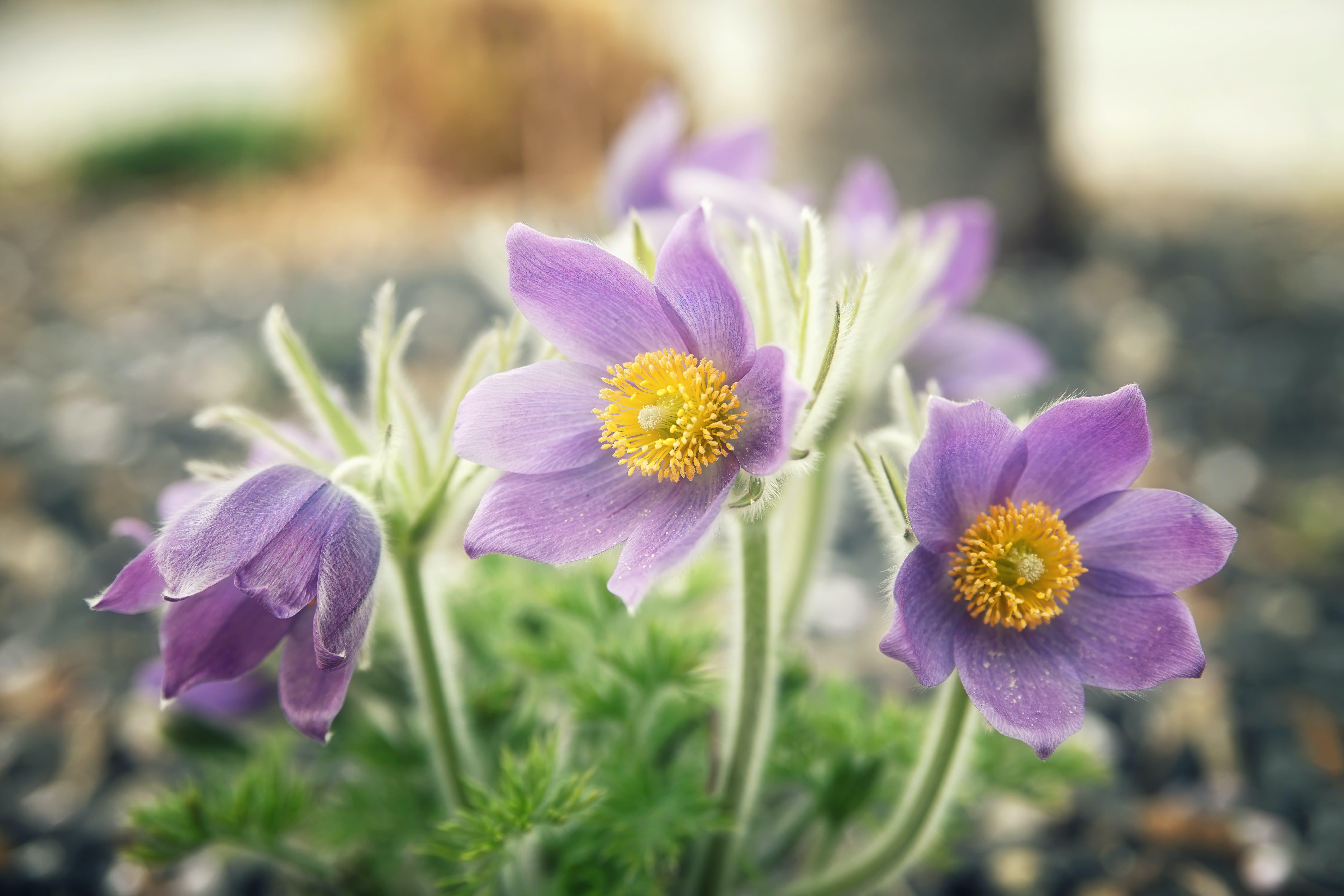Gratis arkivbilde med blomstre, fjær