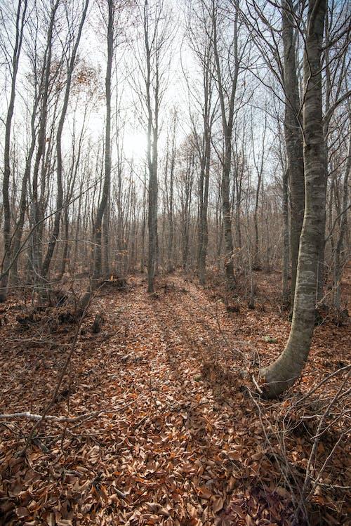 คลังภาพถ่ายฟรี ของ autumun, กันยายน, ตก, ต้นไม้