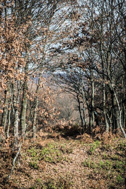 Gratis stockfoto met autumun, bladeren, bomen, Bos