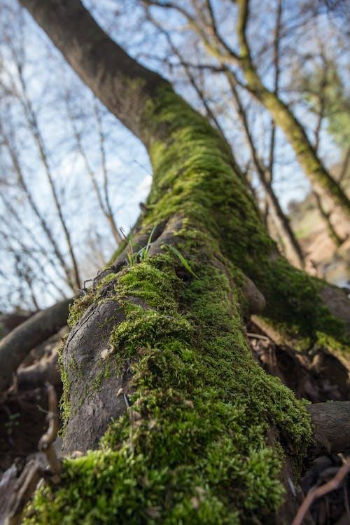 Gratis stockfoto met bamboe, bomen, fabriek, groen