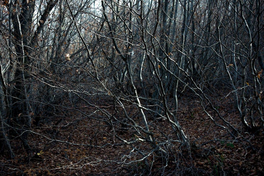 autumun, вересень, дерева