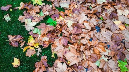 乾いた葉, 秋, 秋の色, 落ち葉の無料の写真素材
