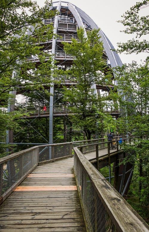 Бесплатное стоковое фото с архитектура, вид, дерево, деревья