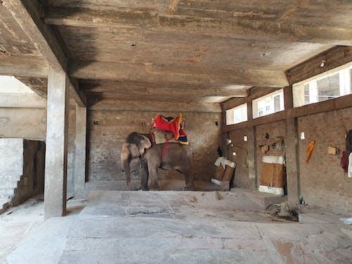 Foto stok gratis gajah, India, jaipur, kesepian