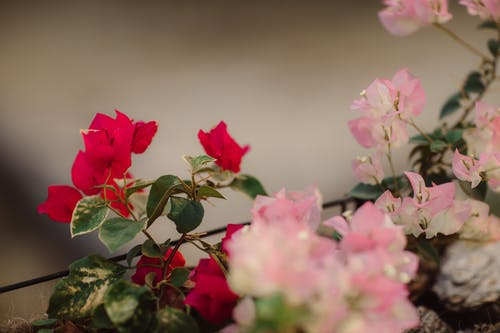 Darmowe zdjęcie z galerii z delikatny, flora, kompozycja kwiatowa, kwiaty