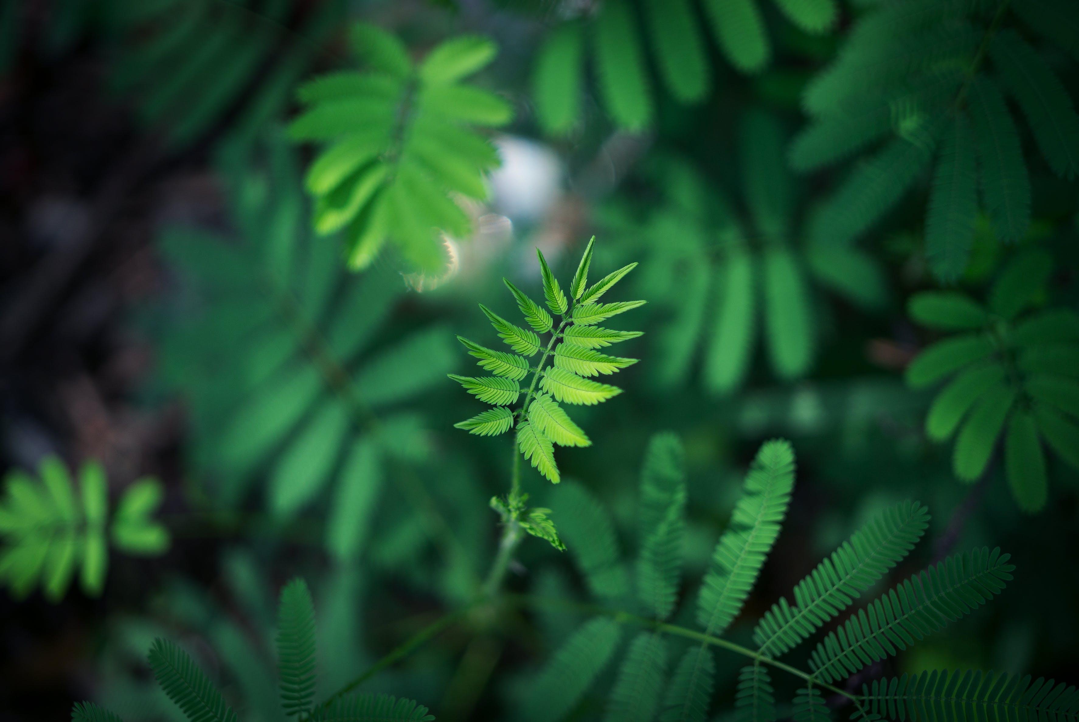 Gratis arkivbilde med grønn, makro, nærbilde, planter