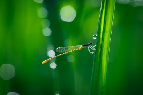 Brown Damselfly on Green Grass