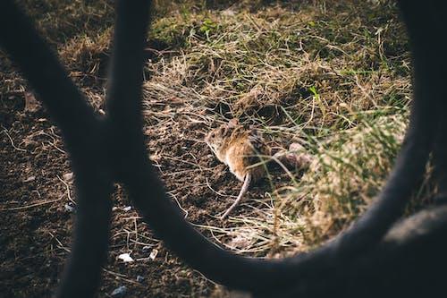 Foto stok gratis cahaya, mouse, musim semi, pagar