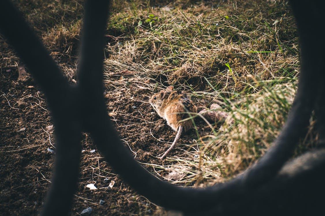 весна, мышка, парк