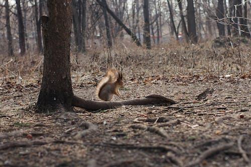 Kostenloses Stock Foto zu eichhörnchen, eingeschlafen, frühling, park