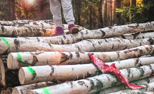 Photo Of Person Standing On Wooden Logs