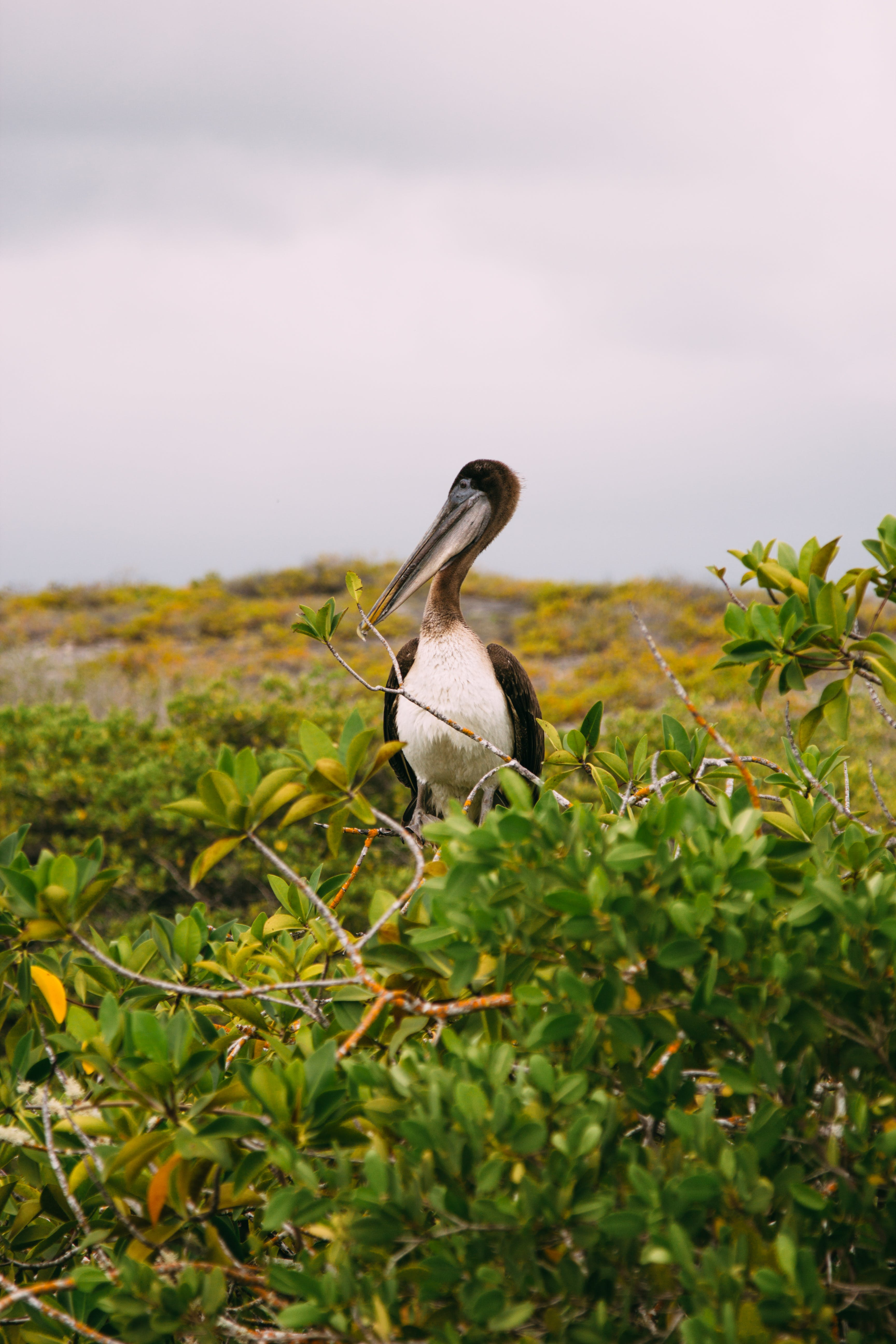 Black and White Bird Surrounded by Plants