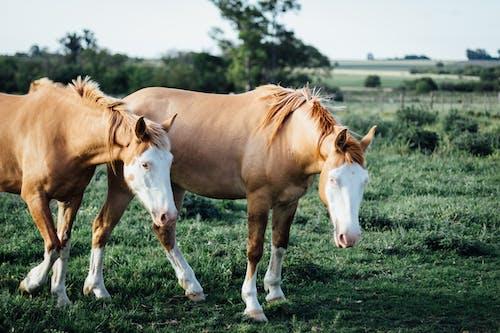 Photos gratuites de à cheval, action, animal, animal de compagnie