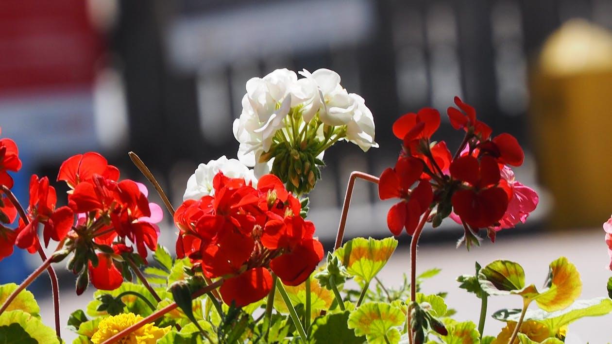 花, 花卉