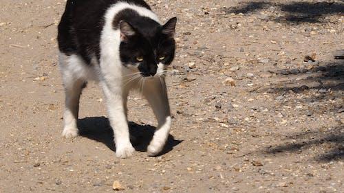 喜怒無常的貓, 脾氣暴躁的貓, 貓 的 免費圖庫相片