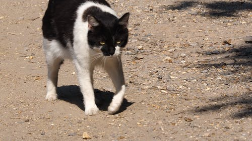 Základová fotografie zdarma na téma kočka, náladová kočka, nevrlá kočka