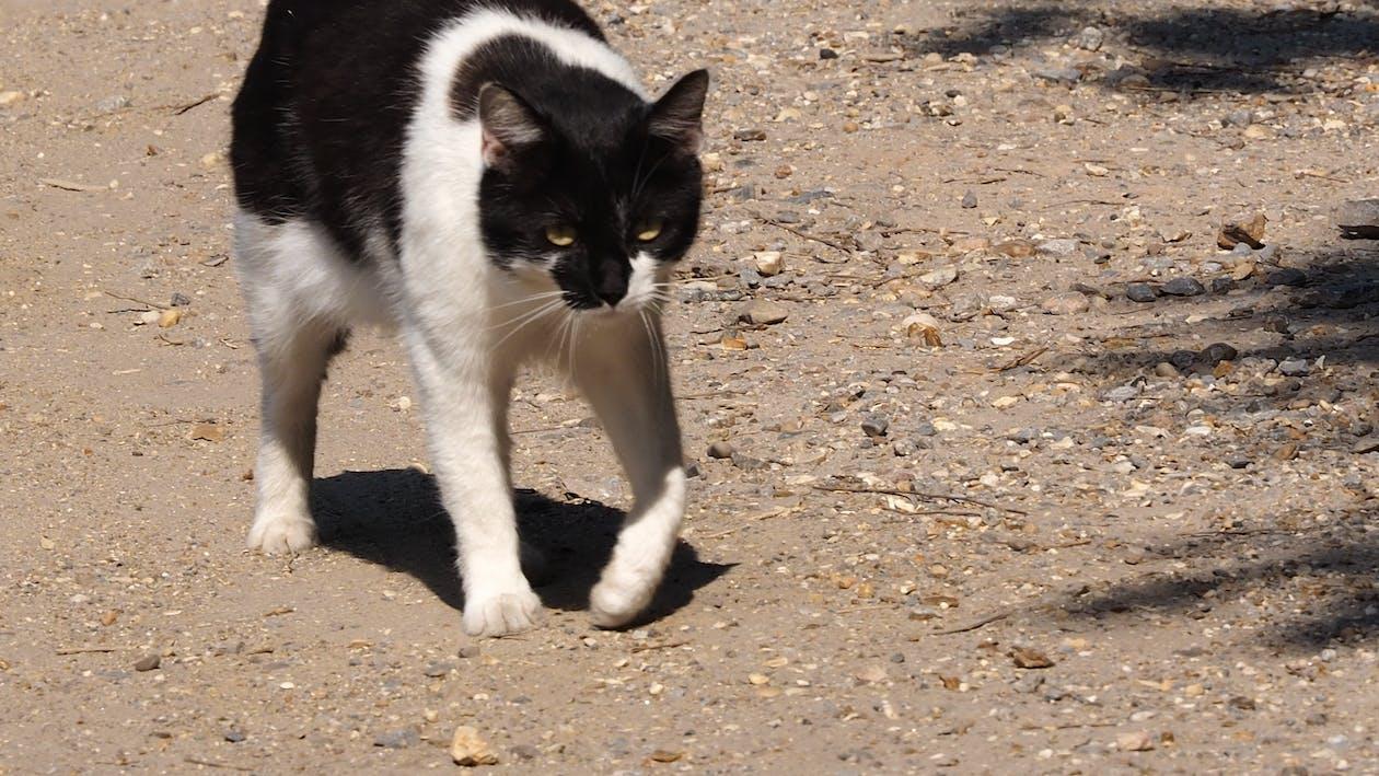 喜怒无常的猫, 脾气暴躁的猫, 貓