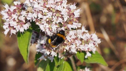 Foto profissional grátis de abelha, flores
