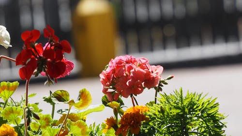 คลังภาพถ่ายฟรี ของ ดอกไม้