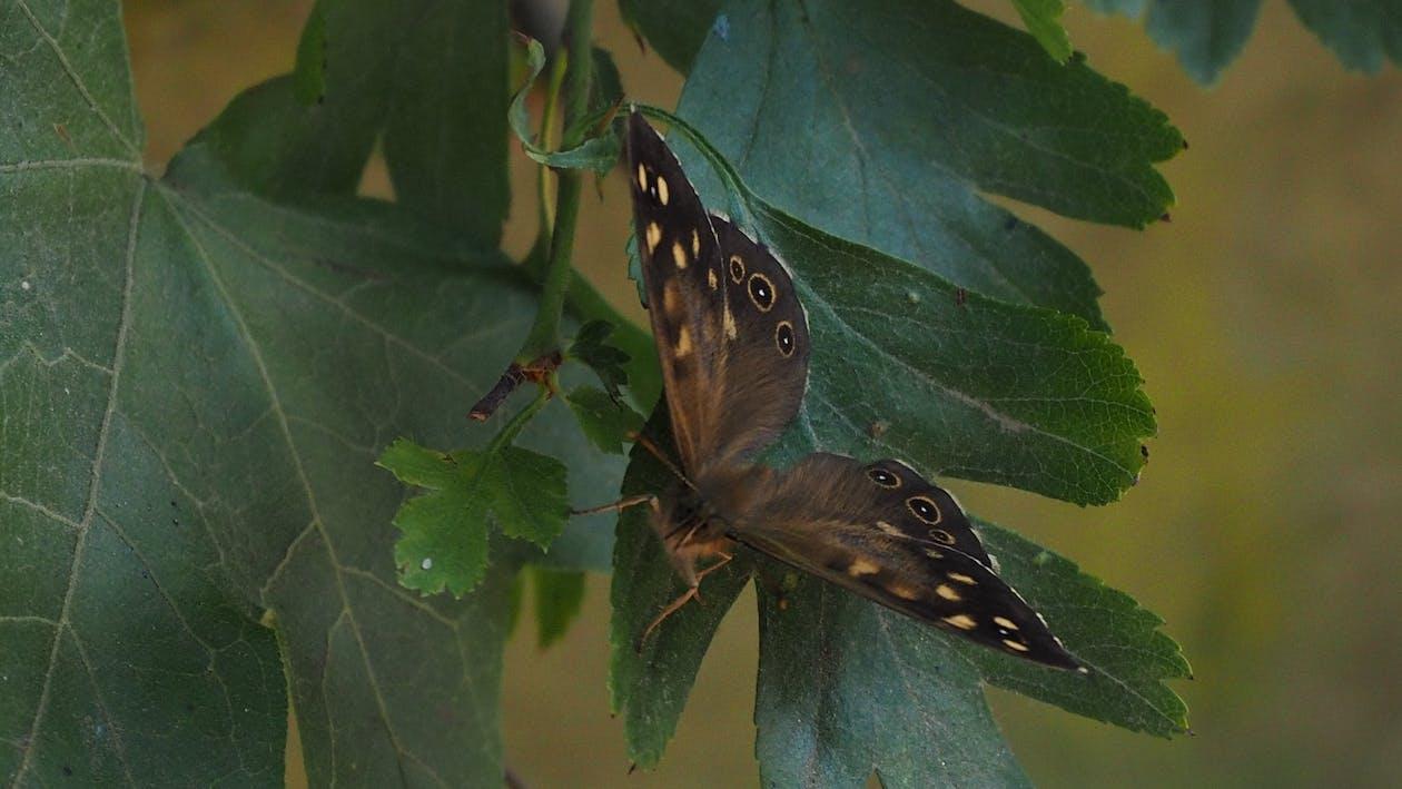 나방, 나비