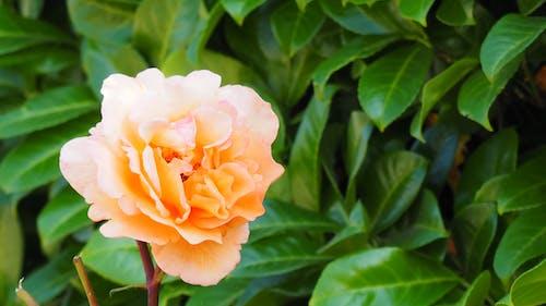 노란색 꽃의 무료 스톡 사진