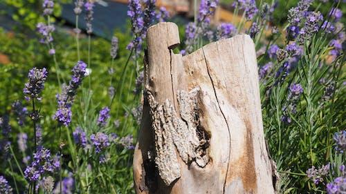 原本, 木, 木頭 的 免費圖庫相片