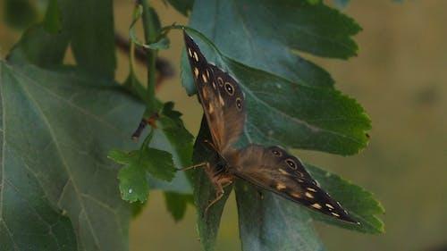 Foto profissional grátis de borboleta, traça