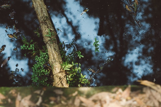 Water Pond With Leaves and Tree Branch