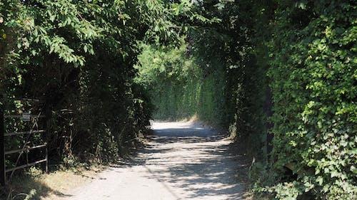 小路, 巷道, 車道 的 免費圖庫相片