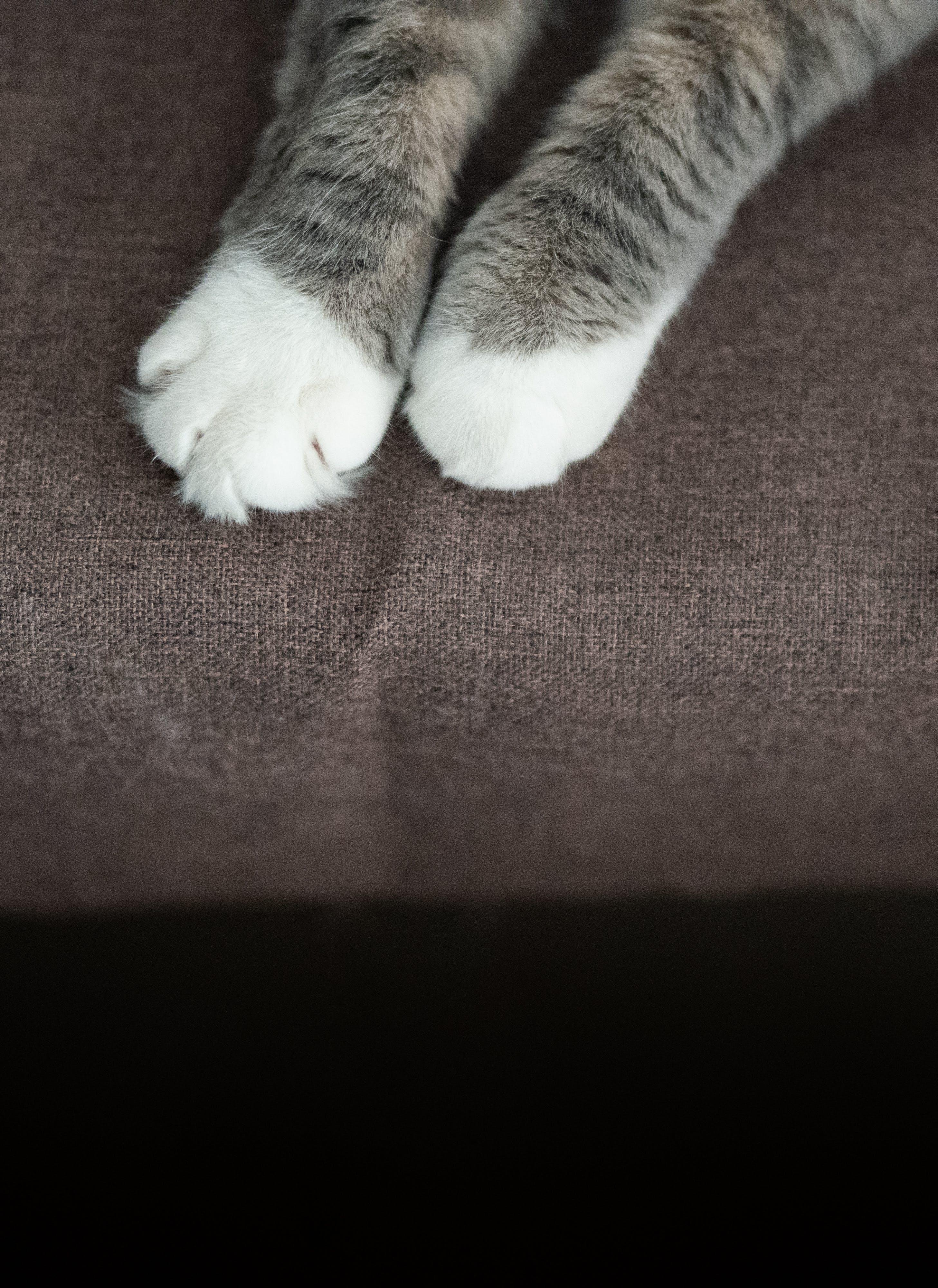 ev kedisi, hayvan, kedi, kedigil içeren Ücretsiz stok fotoğraf
